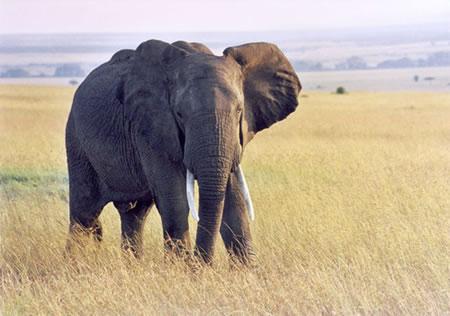 Архитектурата е слон