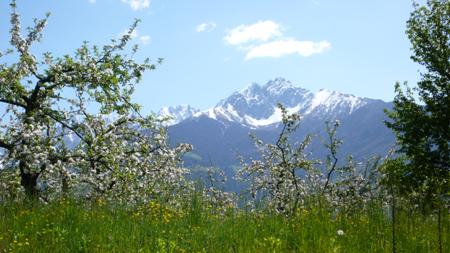 Цъфнали ябълки в Dorf Tirol