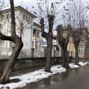 """""""Обезглавяването"""" на дърветата в българските градове"""